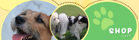 千葉県柏市と松戸市にあるペットショップ パートナーでは、柏市・流山市・松戸市を中心に、 トリミングやペットホテルや子犬販売など 幅広く取り扱っております。